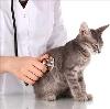 Ветеринарные клиники в Славске